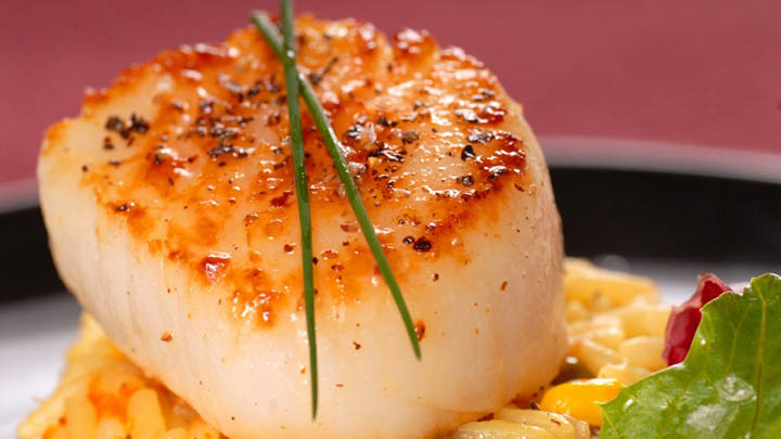 Freshly seared scallop on a bed of risotto